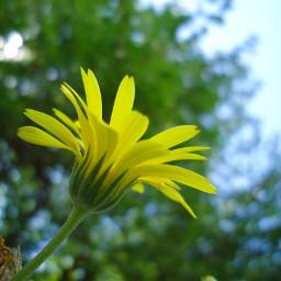 photography flower msflowers freetoedit