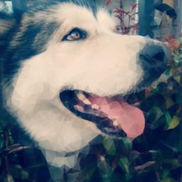 dog filter mine effect
