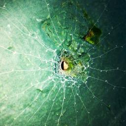 spiderweb spider wall hole green