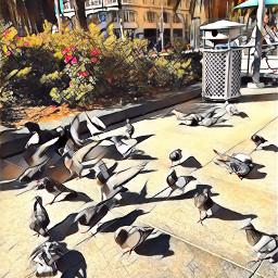 unionsquare birds
