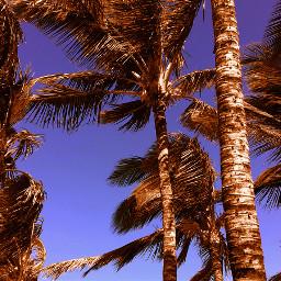beach colorful colorsplash palmtrees color