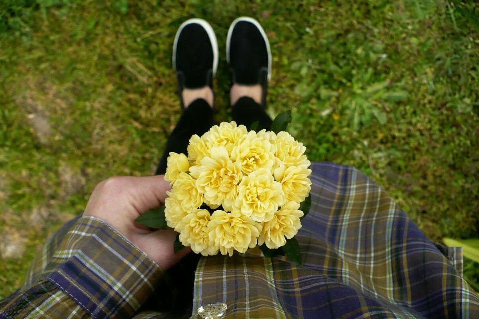 y e l l o w #FreeToEdit #Flower