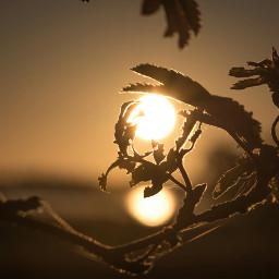 sunrise reflection water leaves sun dpcmorningvibes
