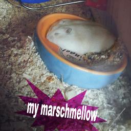 sweet sleep marschmellow white