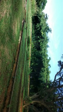 nofilter nature greenery