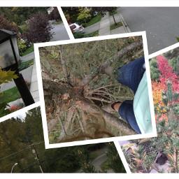 freetoedit treeclimbing nature photography heights