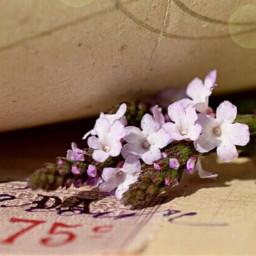 flower vintage