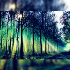 freetoedit nature colorful hdr photography