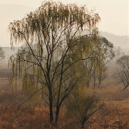 tree trees korea travel hdr freetoedit