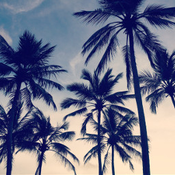 srilanka kalutara palmtrees swim sunset freetoedit