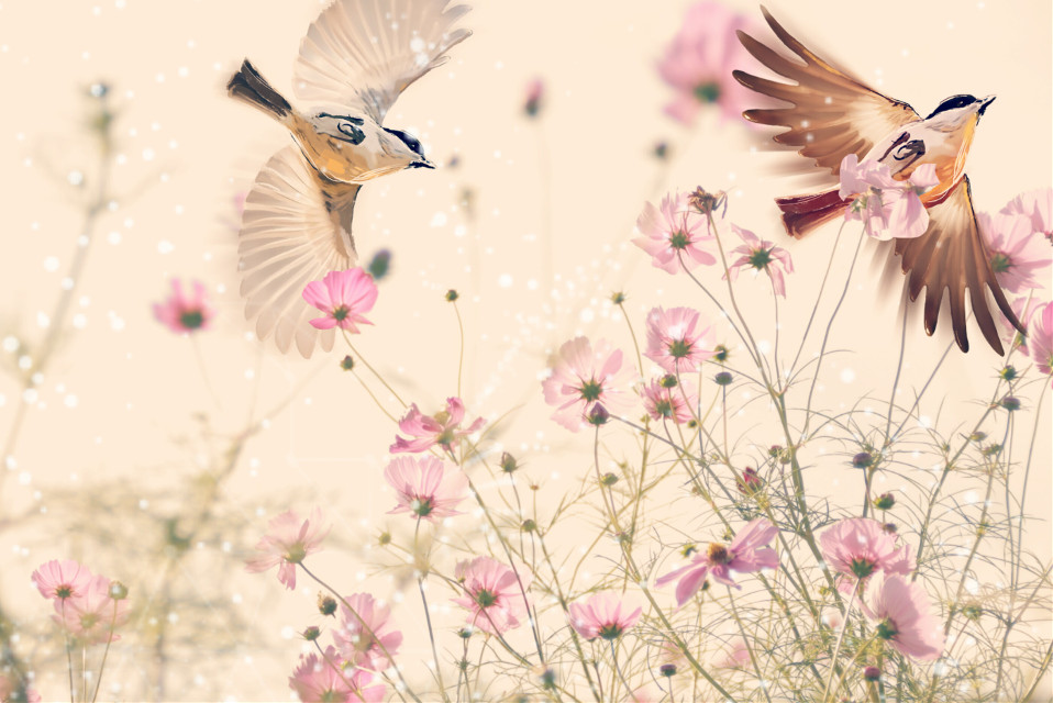 #FreeToEdit  #flowers #birds #qt #cute #pink #white