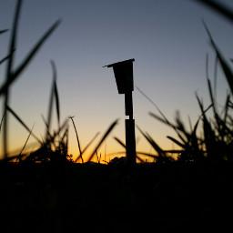 sunset birdhouse