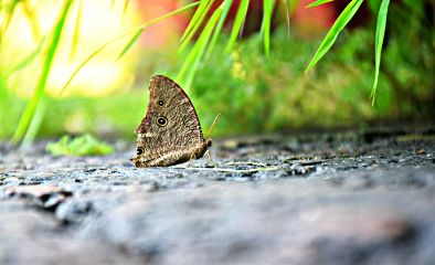 freetoedit butterfly nature photography