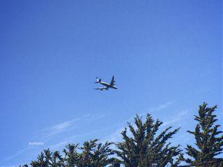 goodmorningworld clear sky plane trees freetoedit