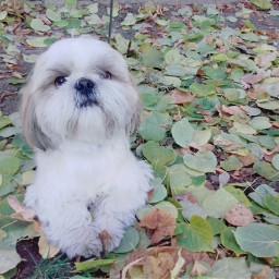 autumn kiev dog photography petsandanimals