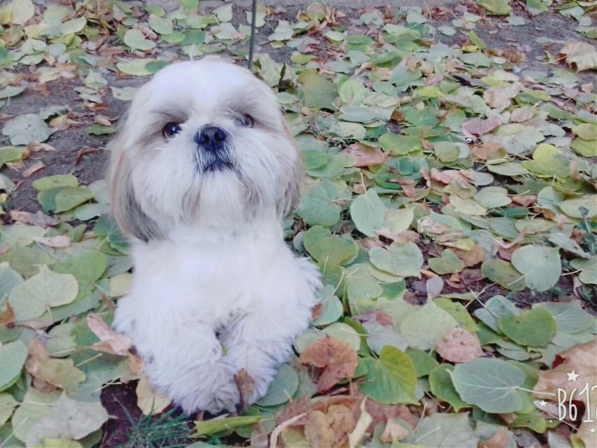 #autumn  #kiev  #dog #photography  #petsandanimals  #pets & animals  #photo  #amber