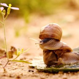 snail forest flower sand macro