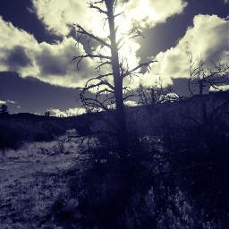 tree blackandwhite freetoedit