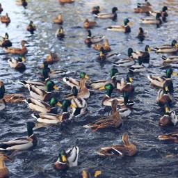 freetoedit nature birds