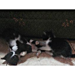 freetoedit cats mininos
