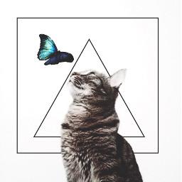 freetoedit remix remixed interesting butterfly