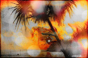 beach bokeh colorsplash hdr travel