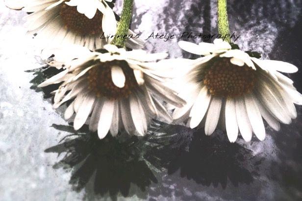 interesting nature flower stilllife photography